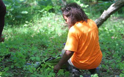 participant learns wetland plant identification