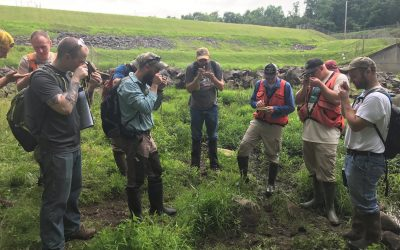 wetland hydric soil study