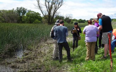students participate in wetland delineation training in the field