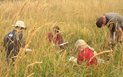 wetland training participants in tall grass