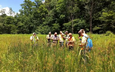 student group identifies plants in northeast region grass field